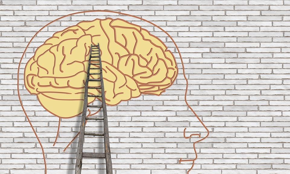Come funziona il cervello? La foto mostra la foto di un cervello e di una scala